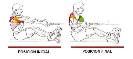 Ejercicios dorsales con mancuernas