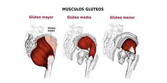 Ejercicios para aumentar glúteos musculos
