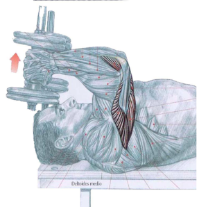 triceps con mancuernas frances