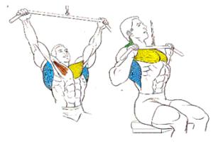 entrenamientos fullbody dorsales jalon