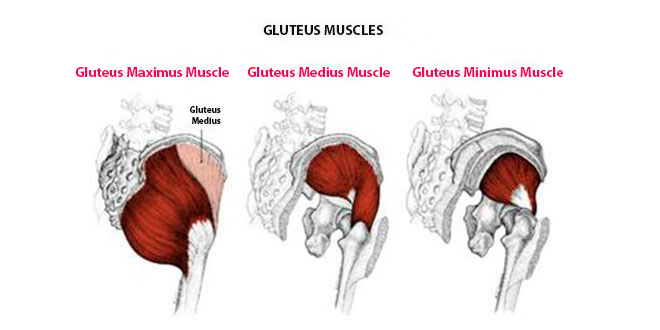 Exercises to get bigger glutes in only 20 minutes! Include them in ...