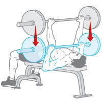 rutina biceps pectoral