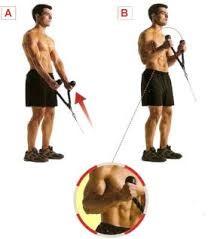 rutina biceps polea