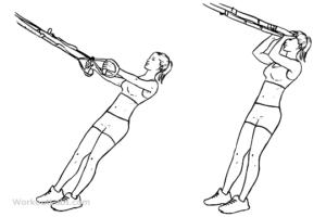 rutina biceps trx