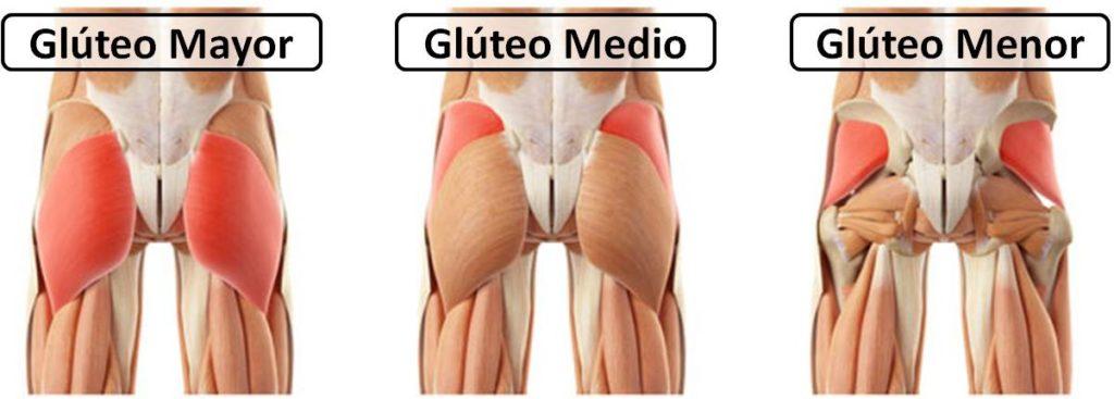 fortalecer gluteos tipos