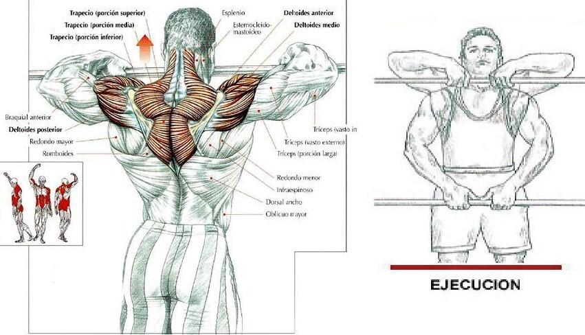 Mancuerna musculos implicados remo con