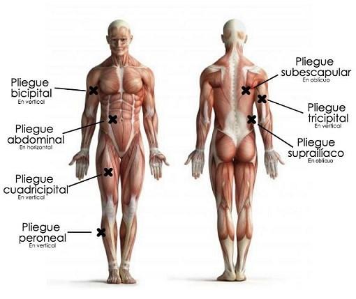 grasa corporal pliegues