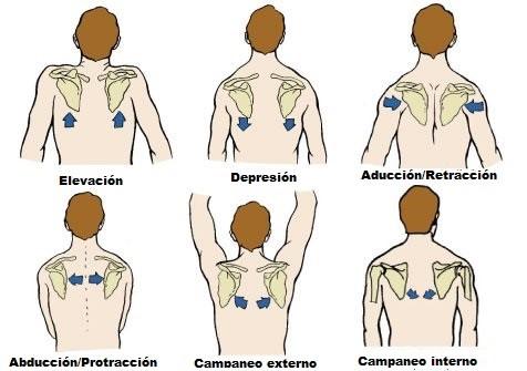 ejercicios para pectorales hombros