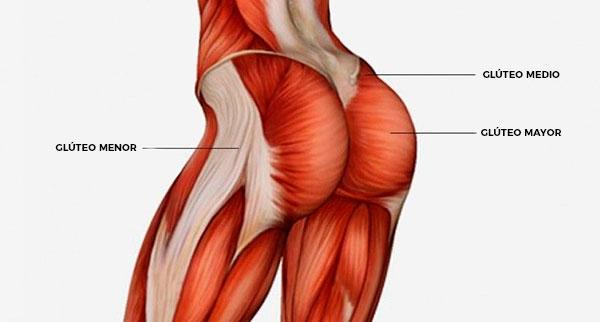 rutina de piernas para gym gluteos