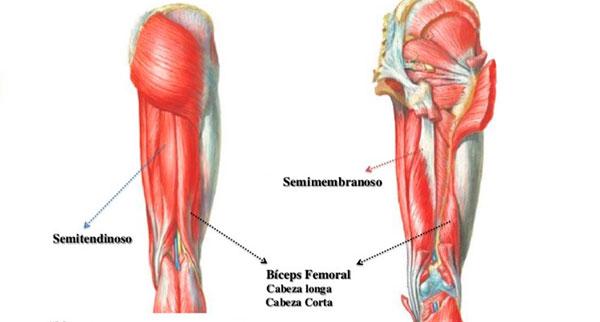 rutina de piernas para gym isquiotibiales