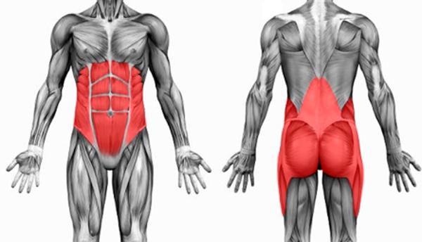 core musculos