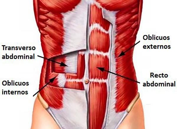 cuales son los musculos del core y para que sirven